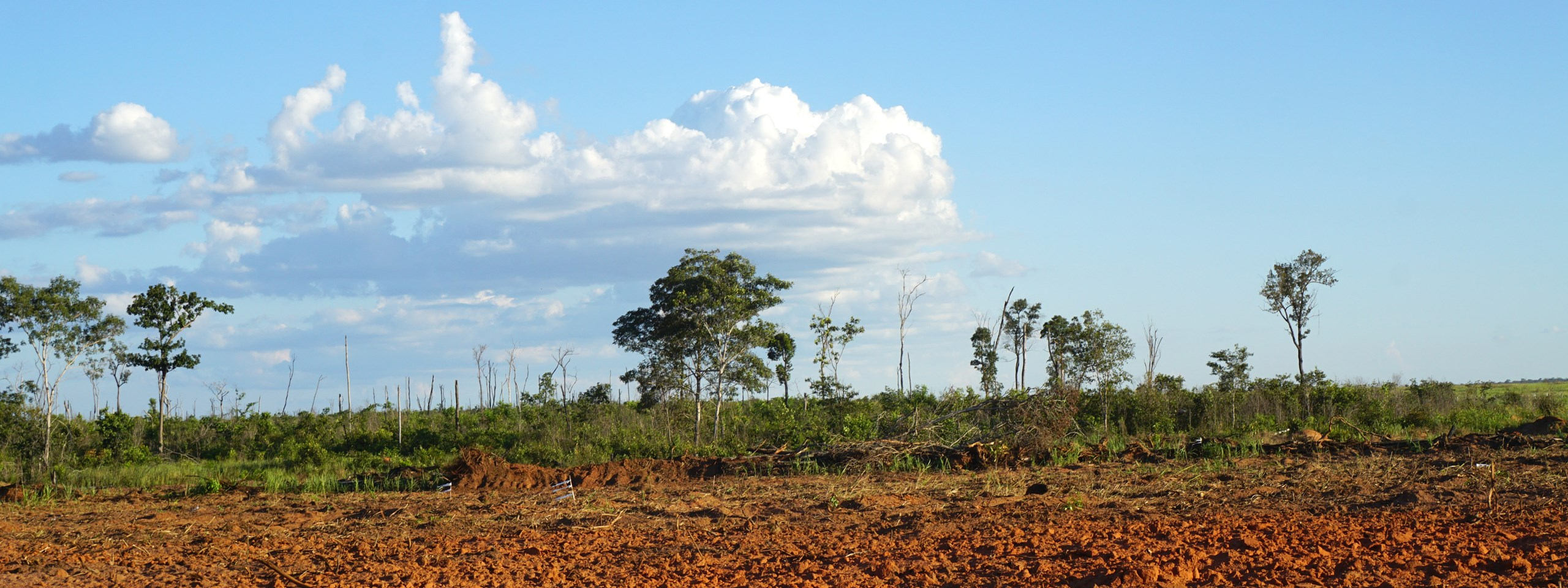 deforestation research A new cornell-led study shows that deforestation and subsequent use of lands  for agriculture or pasture, especially in tropical regions,.